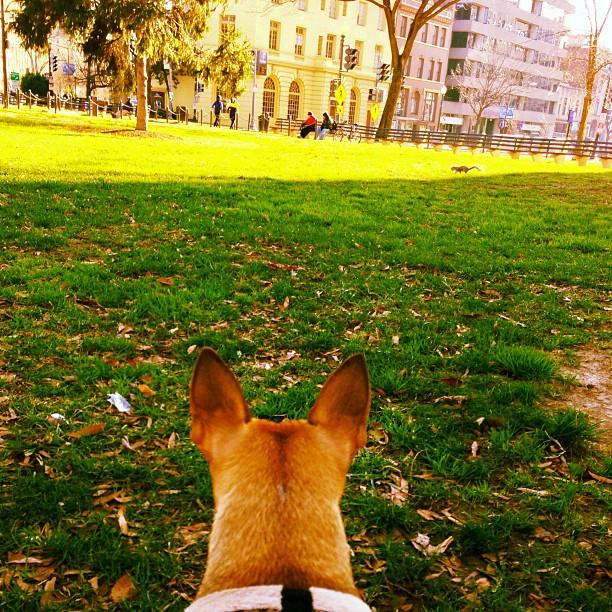 Last minute squirrel shopping #HRD #Milo